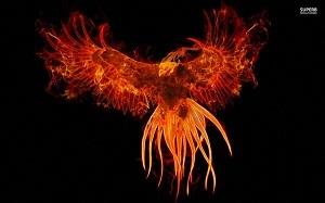 AFC Firebird