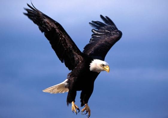 Vulturul Galati